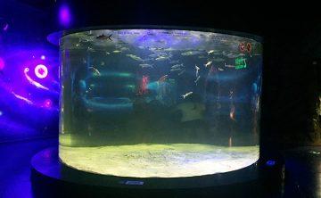 Akrilik balık tankı