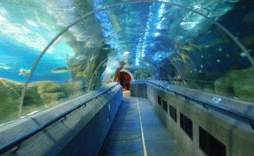 Akrilik tünel